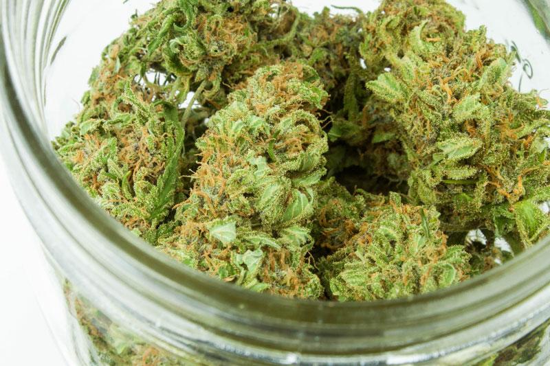 Medical Marijuana Card Canada