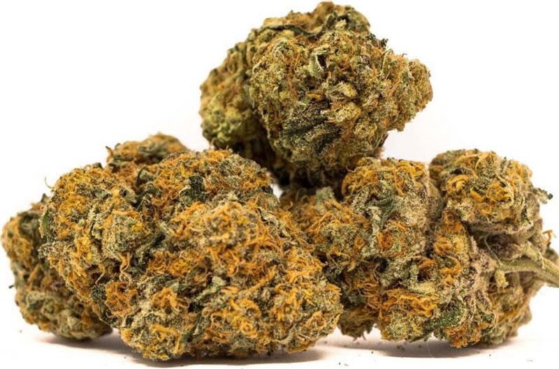 Tutankhamon King Tut Cannabis Strain